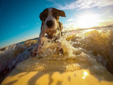 Udajemy się na wakacje nad morzem z psem