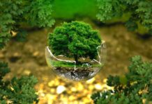 ekologiczne produkty